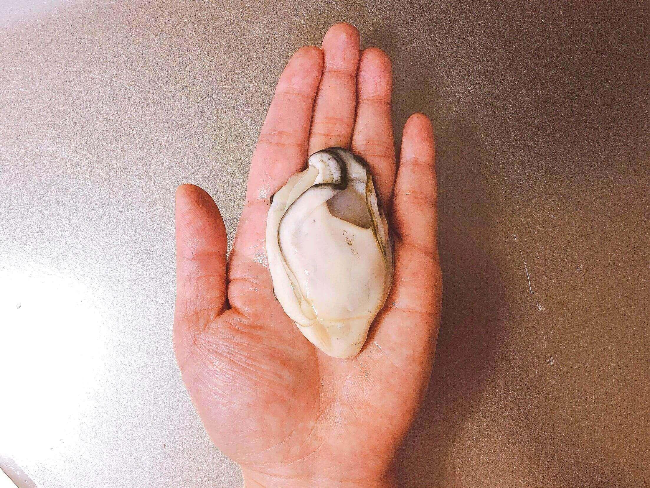 冷凍牡蠣の大きさ